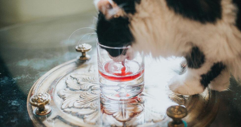 katt äter och dricker inte
